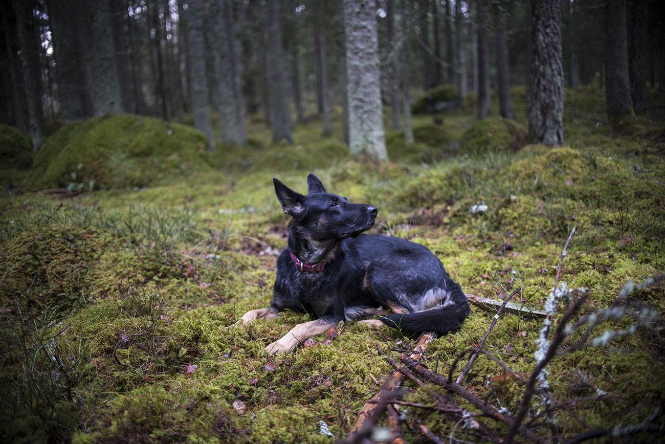 Flexie i skogen